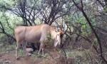 Eland Tsehlanyane National Park