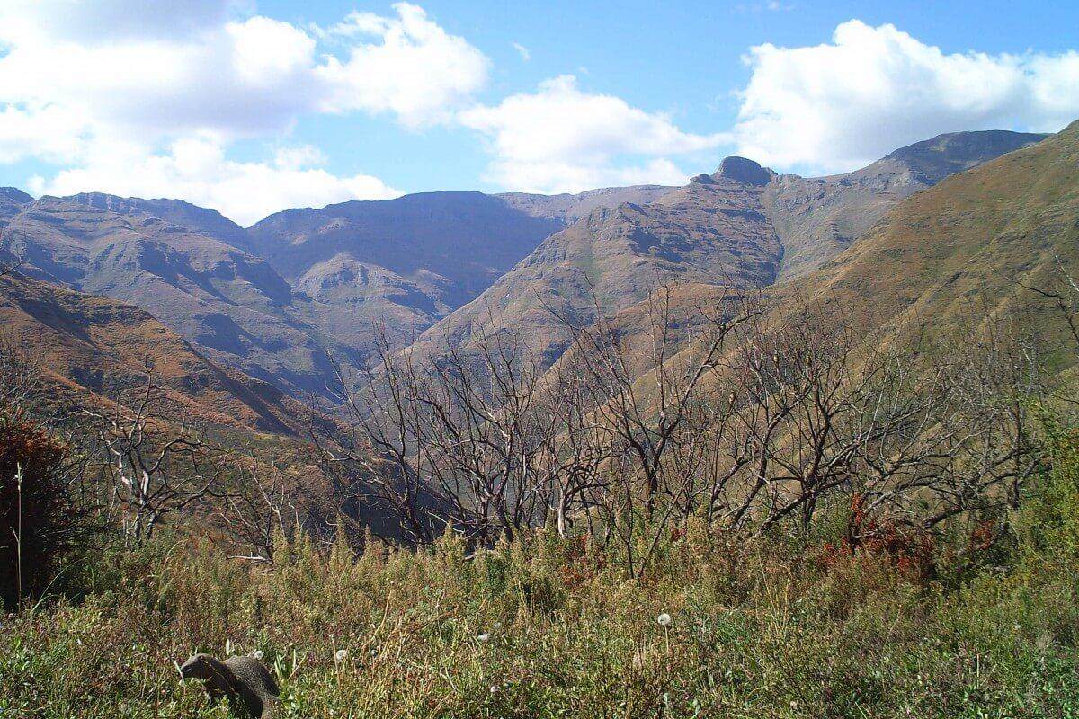 Tsehlanyane National Park Wildlife
