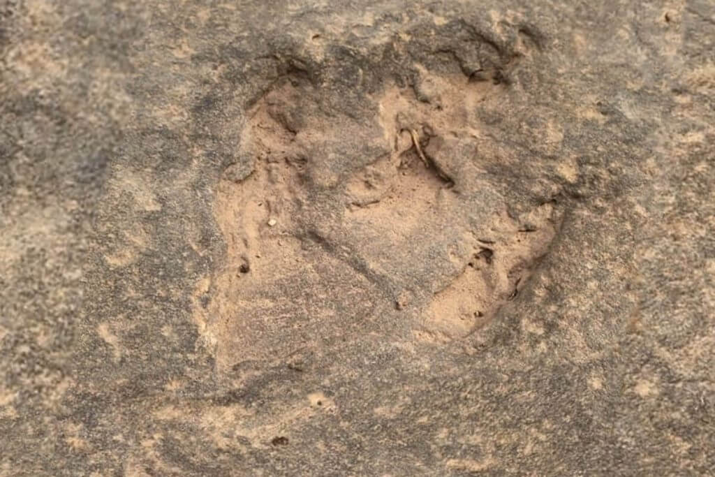 Dinosaur Footprint Tour Lesotho